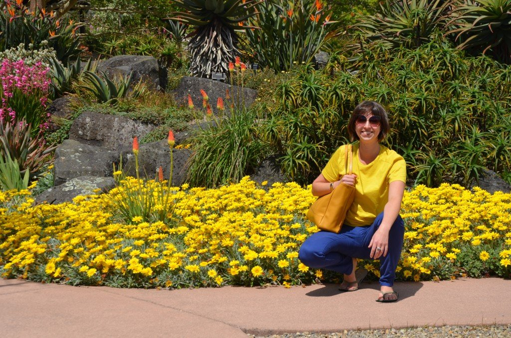 Yellow flowers at Auckland Botanic Gardens