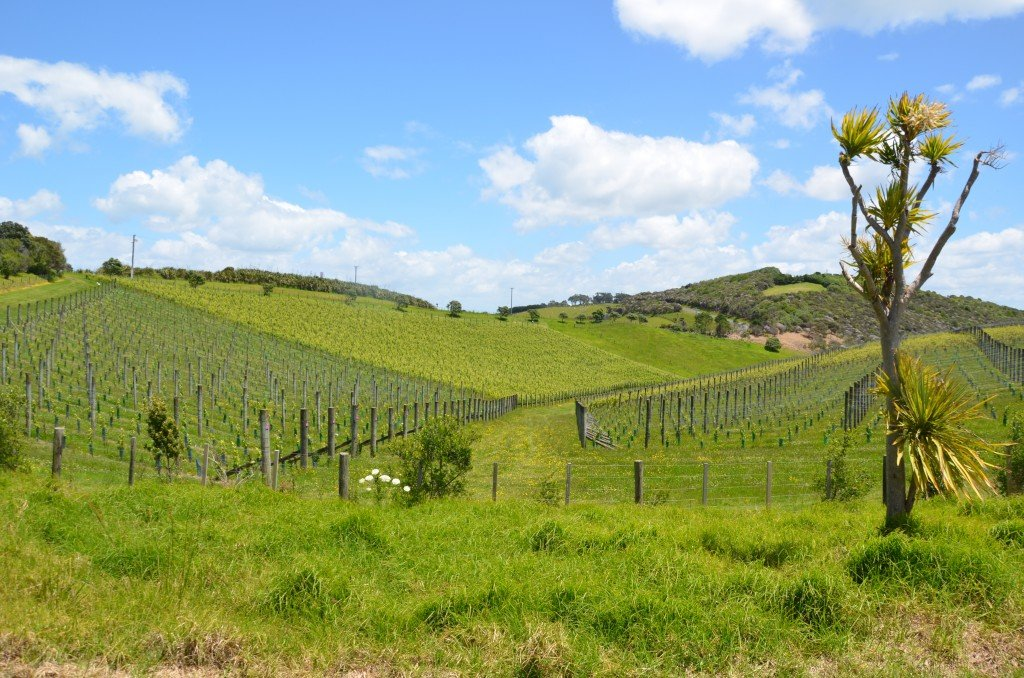 Vineyard on Waiheke