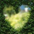 Heart-shaped hedge