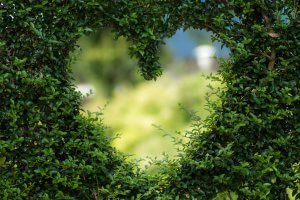Heart-shaped hedge